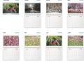 Calendrier plantes vues 2020