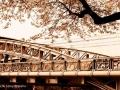 Le pont de l'île des cygnes