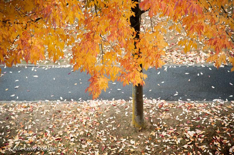 La ronde d'automne
