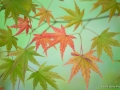 Etoiles d'automne
