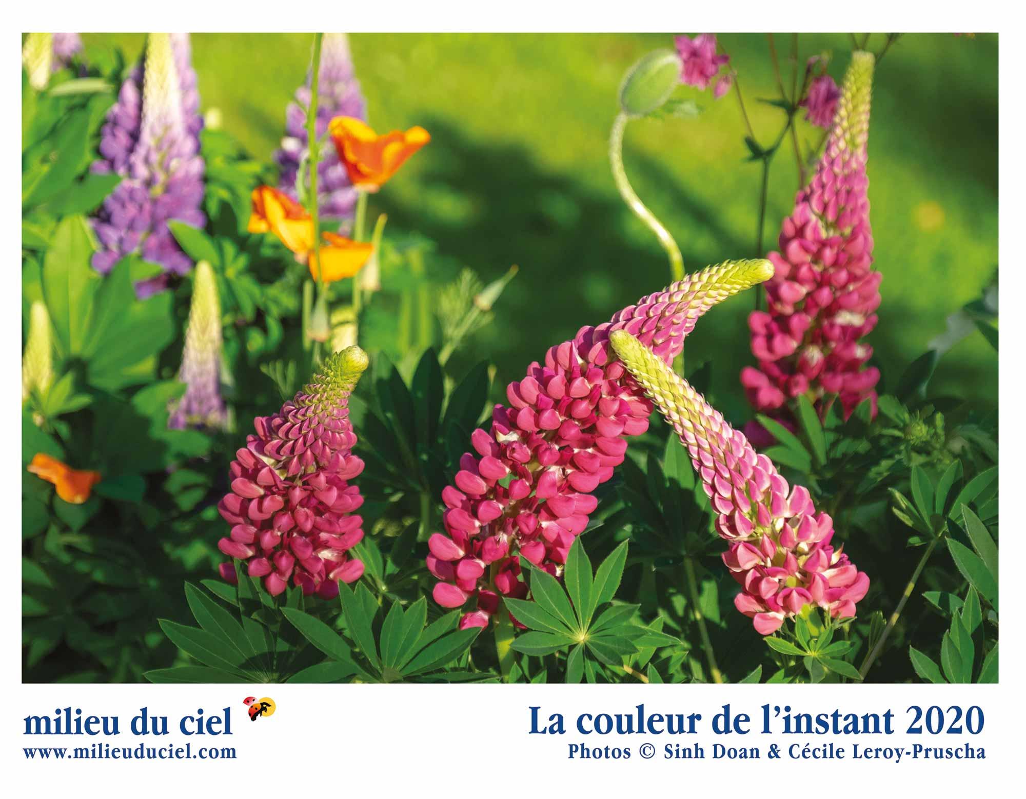 Calendrier plantes 2020