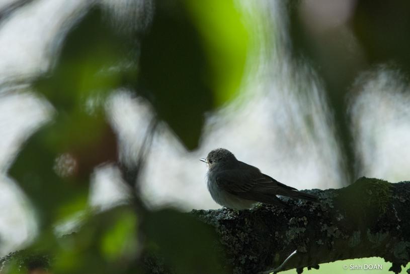 Le songe de l'oiseau