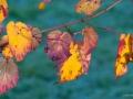 Vers la lumière d'automne