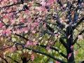 L'automne à Montparnasse