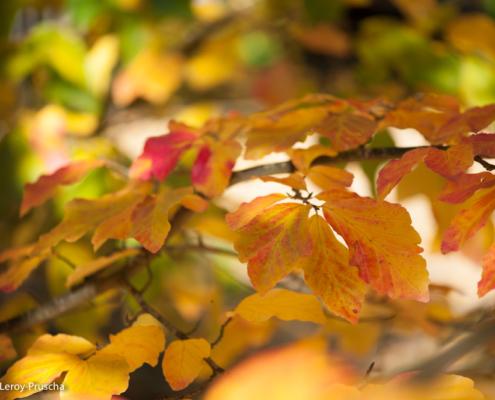 Camaïeu d'automne