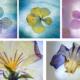 Jardins d'hiver ou les fleurs immobiles